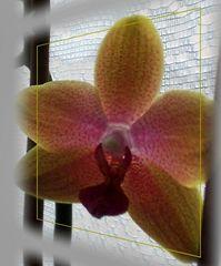 Orchideendia