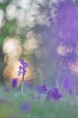 ~ Orchideendschungel ~