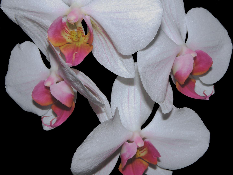 Orchideenkreis