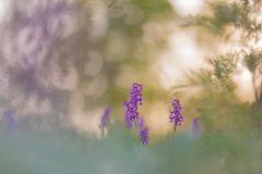 ~ Orchideenparadies ~