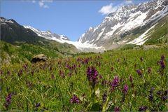 Orchideenparadies Lötschental