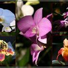 Orchideen...(reloaded)