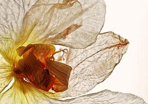 Orchideenscann_2