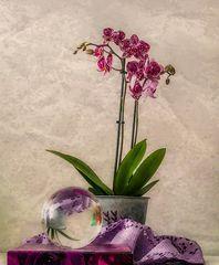 Orchideenstillleben
