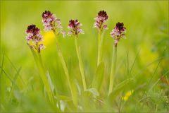 ~Orchideenstrauß~