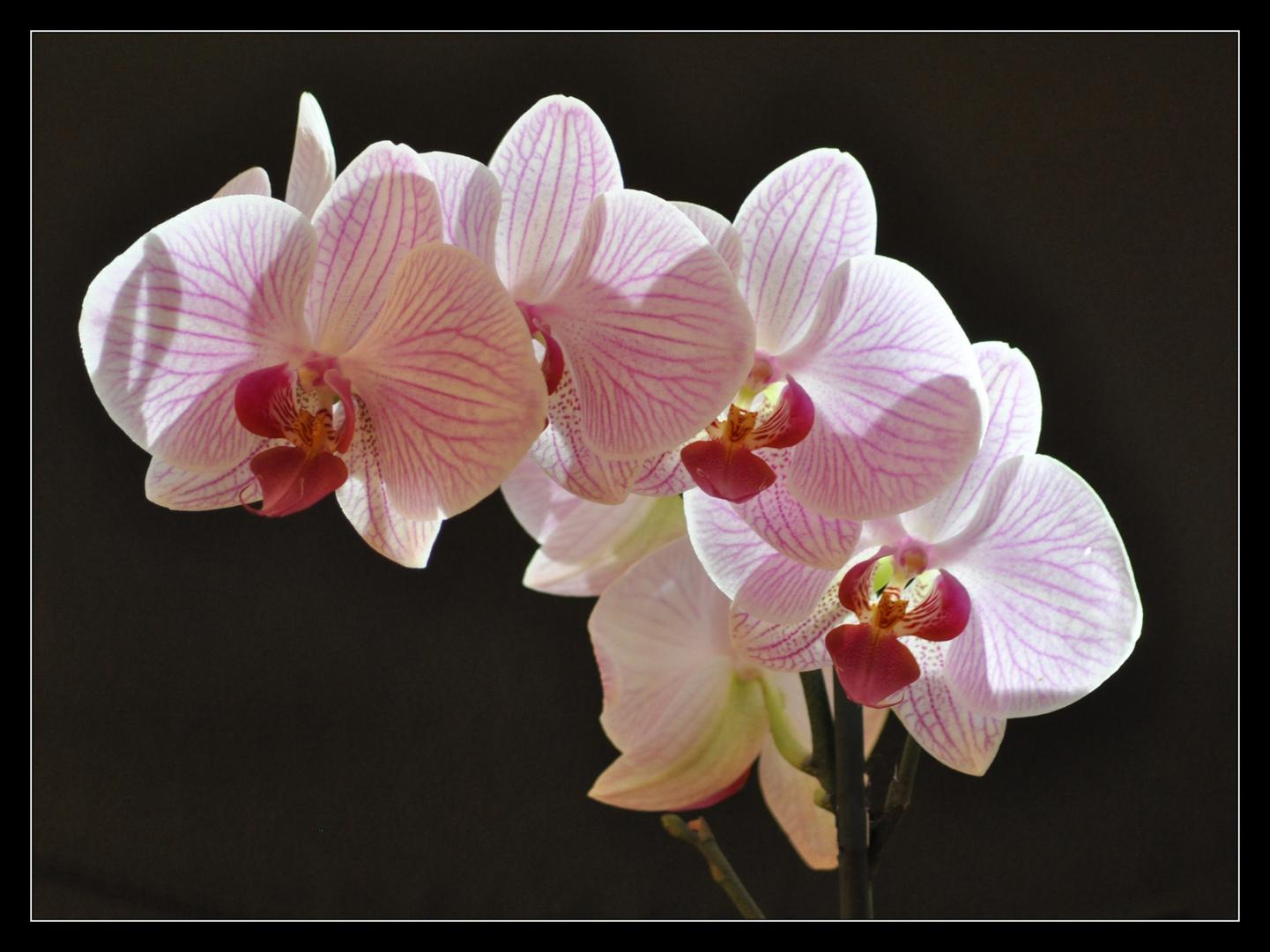 Orchideentag - 2