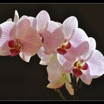 Orchideentag - 2
