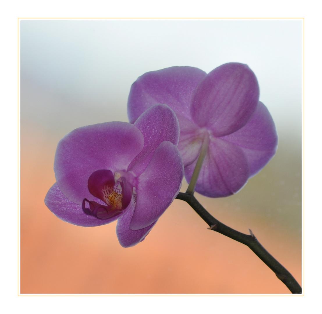 Orchideentag - 3