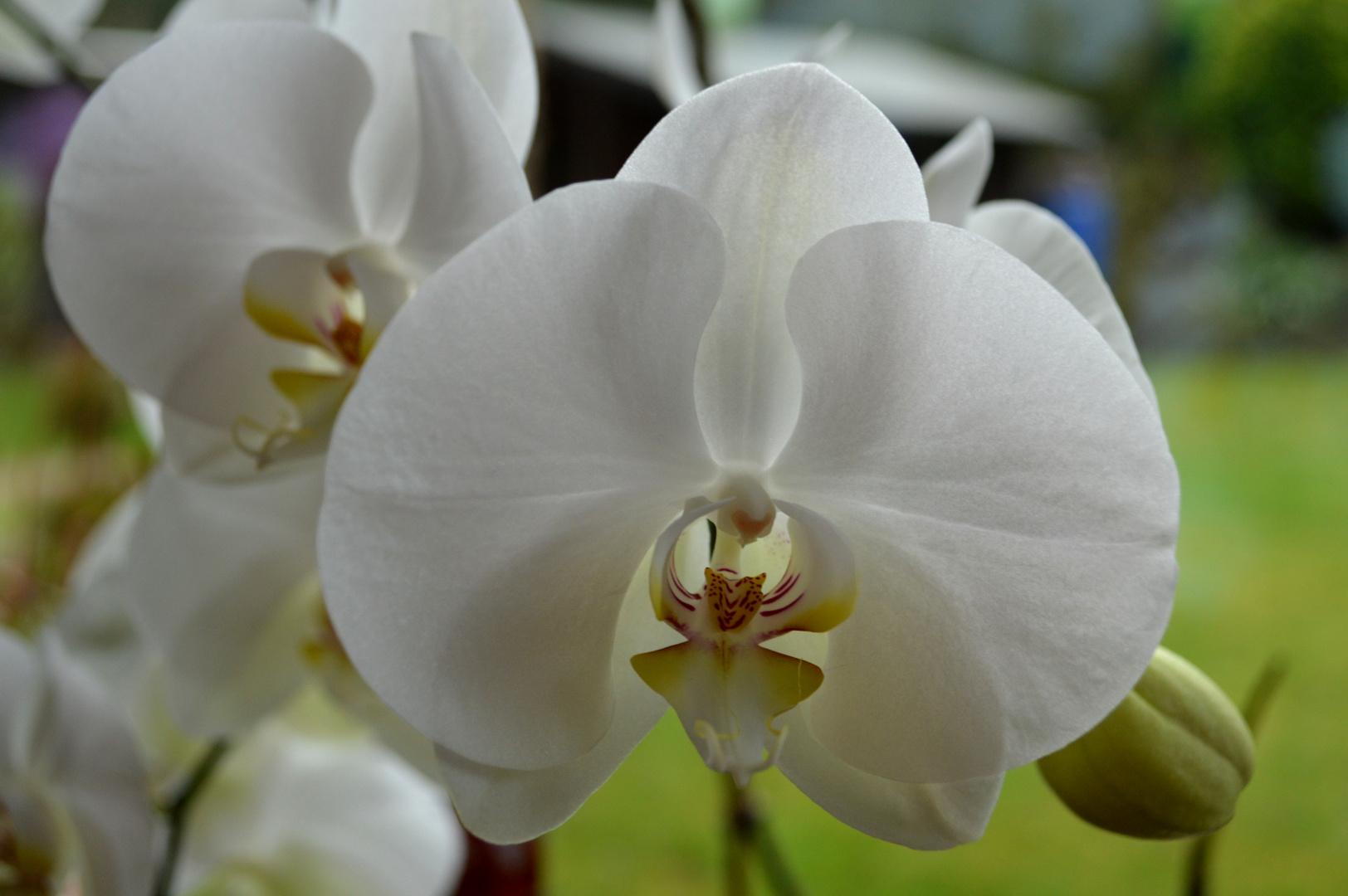 Orchideenversuche