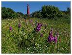 Orchideenwiese auf Schiermonnikoog