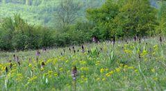 Orchideenwiese