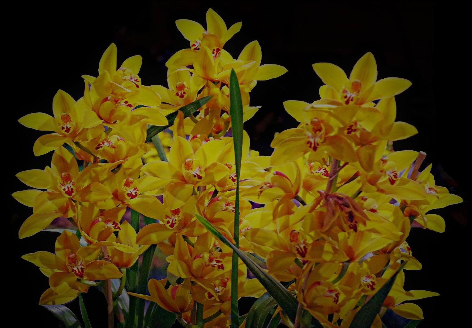 orchidées pour tous .....