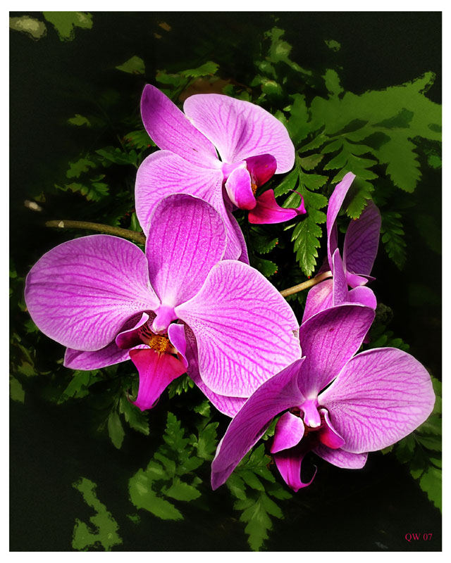 Orchids & Angles