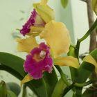 orchids in my garden