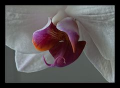 Orchiedetail