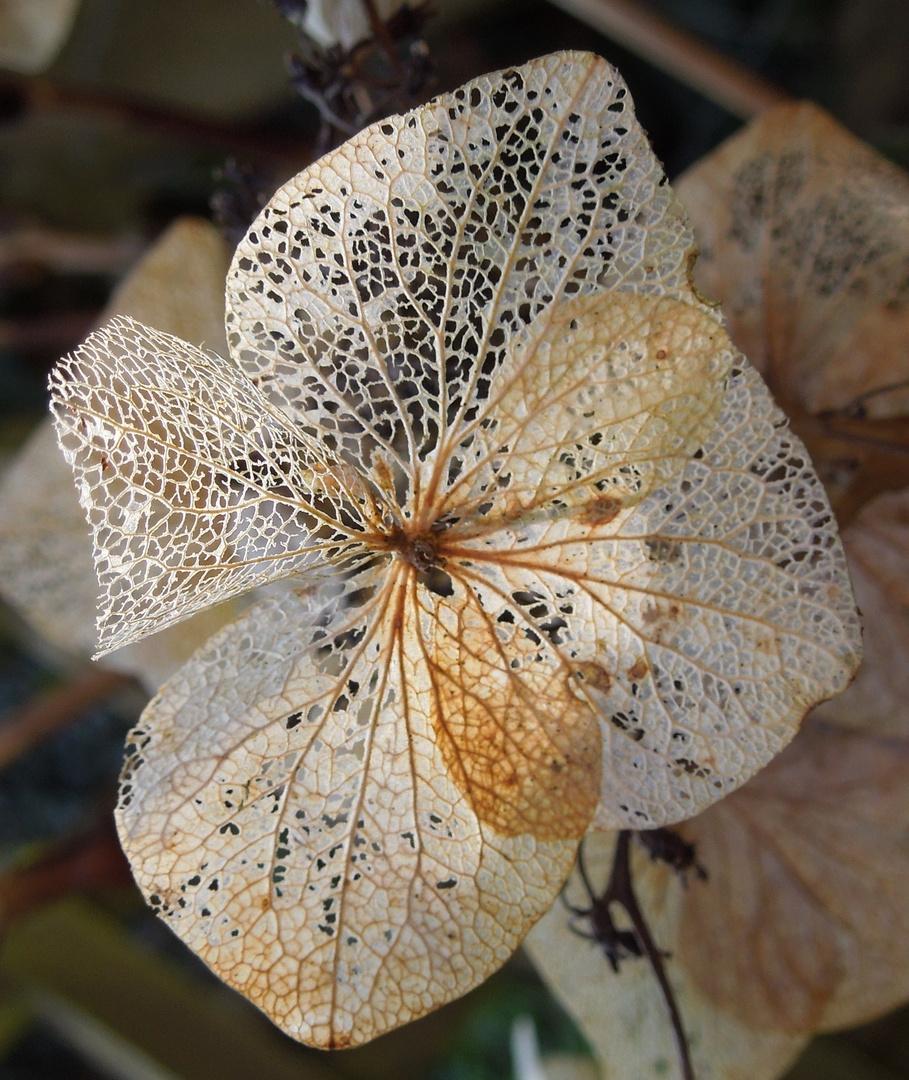 Organic lace