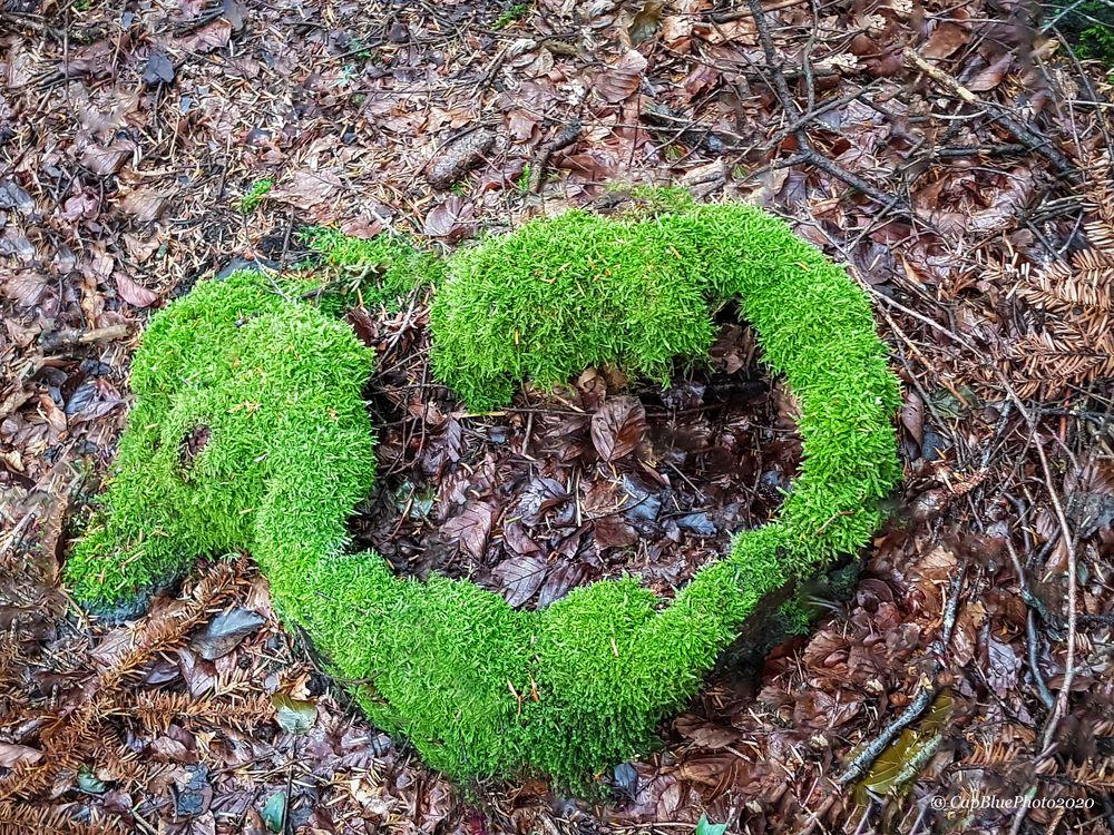 Orginal WC Ente aus dem Wald von Seewald-Besenbach