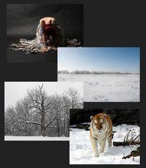Original Fotos