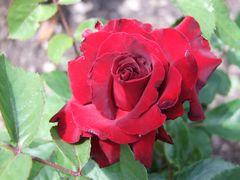 Original zu ~ simply red ~