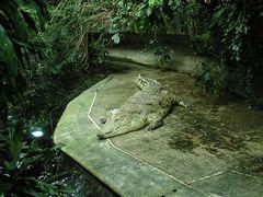 Originalbild Berliner Zoo 2004