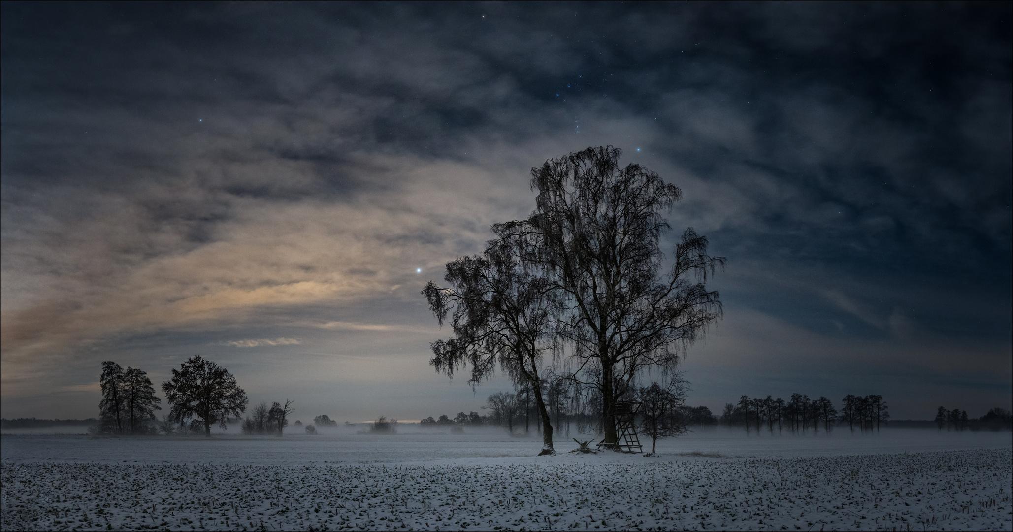 * Orion Tree *
