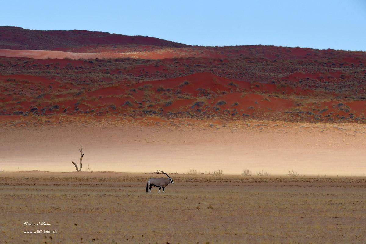 Orix #namibia Oscar Mura https://www.wildlifefoto.it/