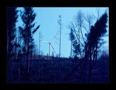 ORKAN-GEWALT - ...ODER:  WIND-KRAFT (?)