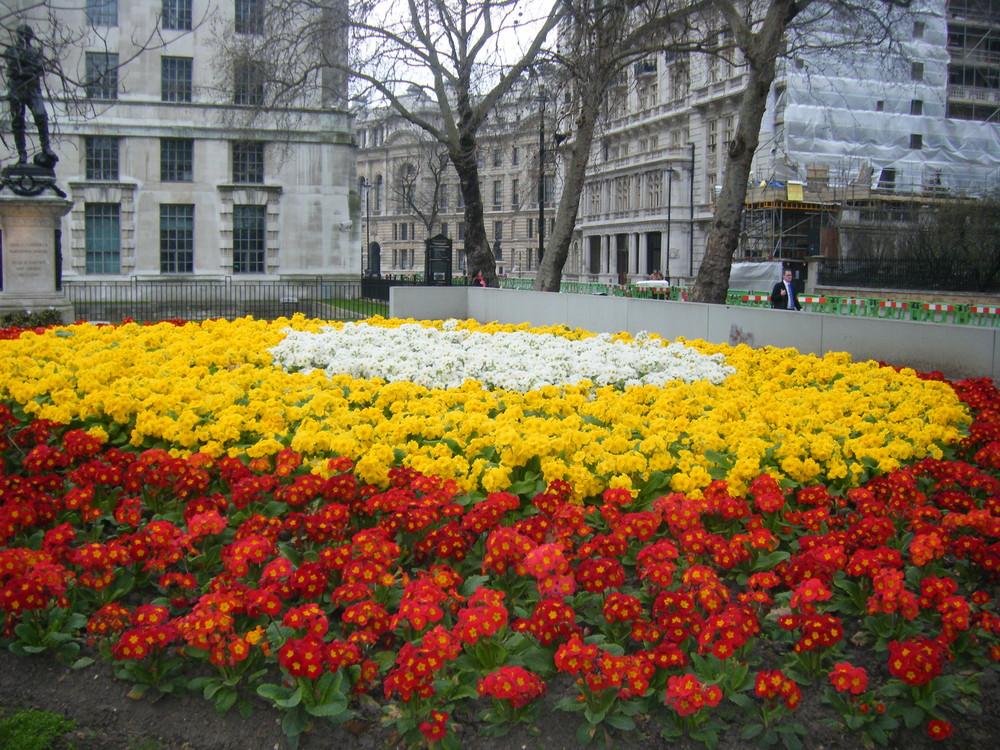 ornamento de flores en un clima BRRRRRRRRRRRRRRRRRRR
