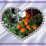 * Ornithogalum * mit dem Herzen gesehen >>
