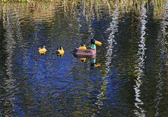 Ornithologische Artenbestimmung gesucht !