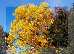 oro d'autunno