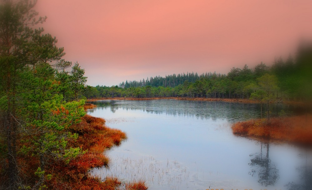 Orphic swamp