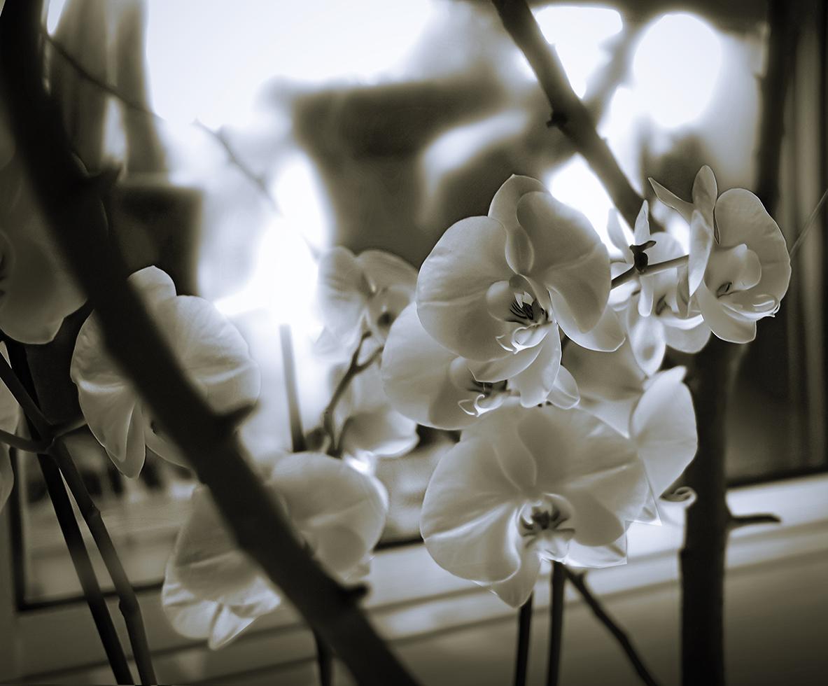 """""""Orquídeas en la ventana del baño """""""