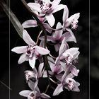 Orquideas I