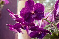 Orquidee - Mittwochsblümchen