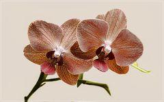 Orquideen  zum Wochenstart