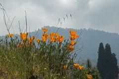 Ort der Blumen
