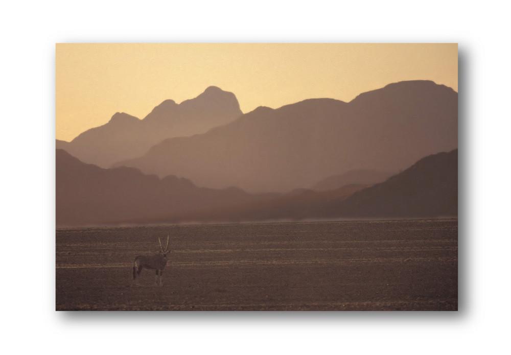 Oryx am Morgen