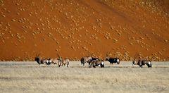 Oryxantilopen im Namib Naukluft N.P.