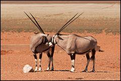 Oryxliebe