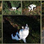 Oscar im Garten