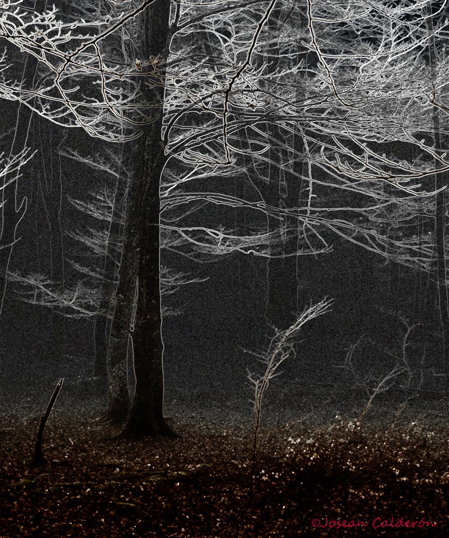 Oscuridad y luz