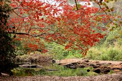 Oshogbo Sacred Grove