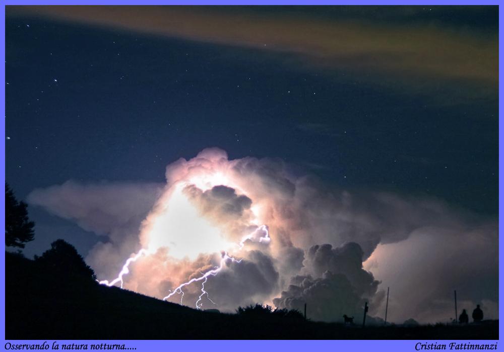 Osservando la natura notturna....