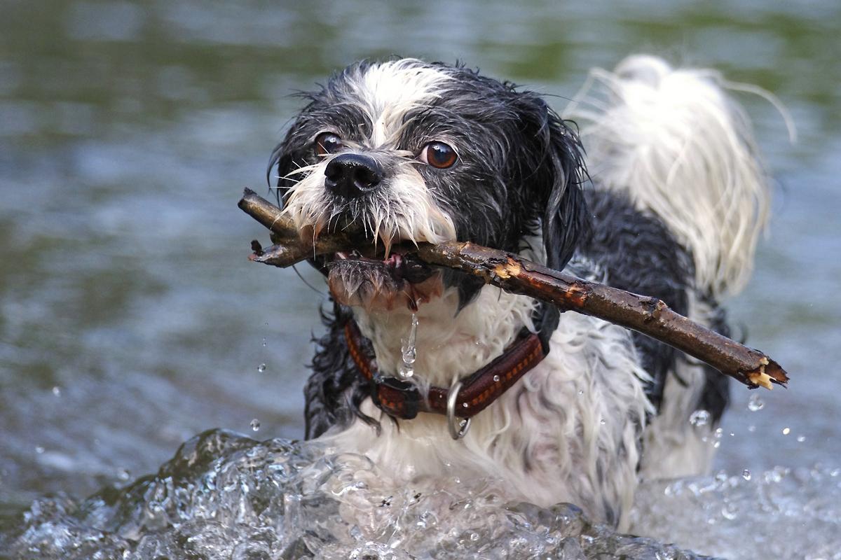 Ossi Bär Der See Hund Foto Bild Tiere Haustiere Hunde Bilder