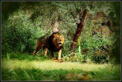 Ostafrika...