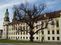 OSTER Baum (2)