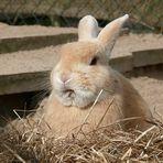 Oster-Kaninchen