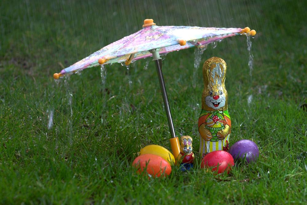 Osterhase im Regen