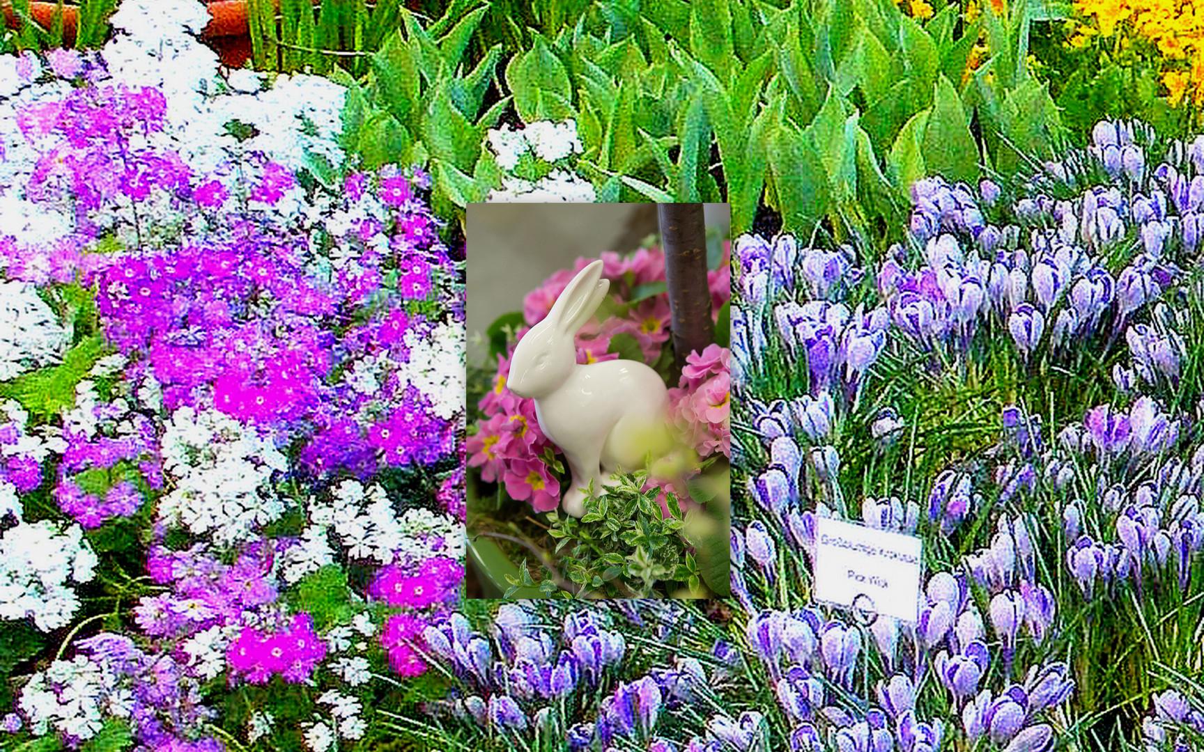 osterhase inmitten der frühlingsblumen foto & bild | blüten u
